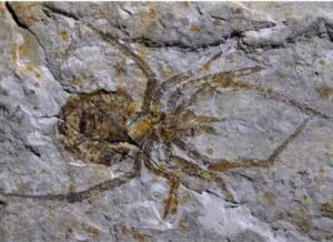 The specimen will be stripped of the scientific name Mongolarachne chaoyangensis and rechristened as a crayfish