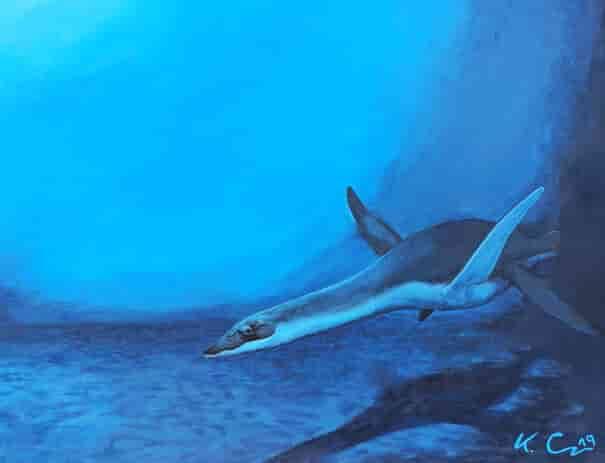 A representation of a plesiosaur - living reconstruction