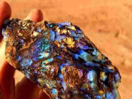"Rough Koroit opal "" Opalized wood "" from Victoria, Australia."