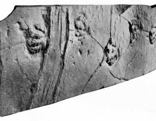 This slab of sandstone has been on display since 1896, showing off the scaly footprints of a prosauropod dinosaur. Scientists only recently realized that the deep grooves on the left may be the track of a sailing stone. Credit: Lull, R.S., 1915