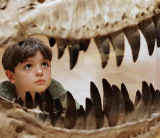 """The new dinosaur is called Tralkasaurus, which means """"thunder reptile"""" in the indigenous Mapuche language common in Patagonia. In this file photo, a boy in Melbourne, Australia inspects the teeth of a theropod dinosaur"""