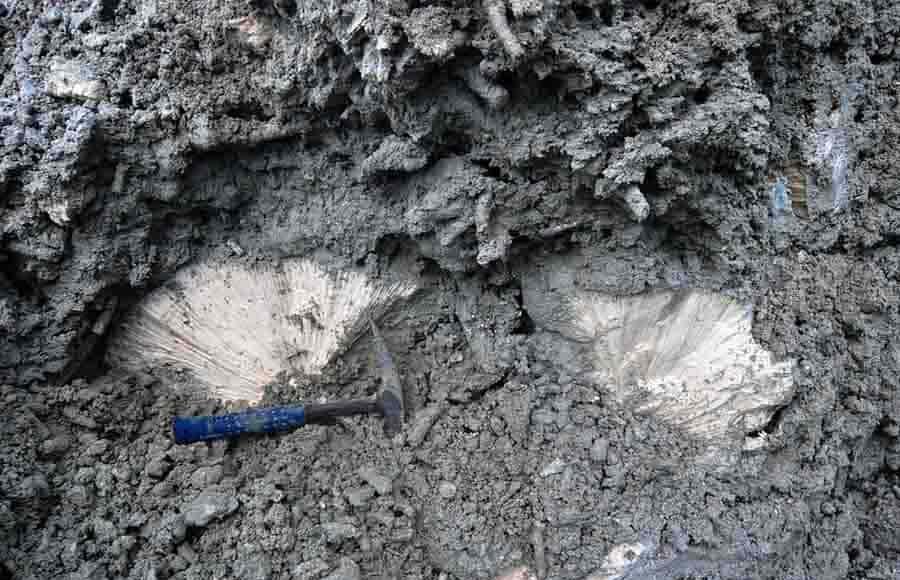 Fossil coral close-up Credit: Aaron O'Dea