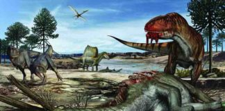Predators abound on land, in the air and in water some 95 million years on the shores of northern Africa -- as shown by the abundant fossils in the Kem Kem region. Large herbivores, such as the long-necked sauropod Rebbachisaurus, could have been hunted or scavenged by several large predators. Credit: Artwork by Davide Bonadonna