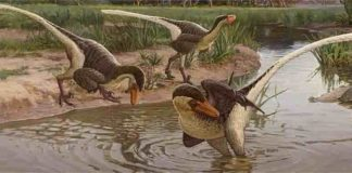 A new feathered dinosaur that lived in New Mexico 67 million years ago is one of the last known surviving raptor species, according to a new publication in the journal Scientific Reports. Dineobellator notohesperus adds to scientists' understanding of the paleo-biodiversity of the American Southwest, offering a clearer picture of what life was like in this region near the end of the reign of the dinosaurs. Credit: Sergey Krasovskiy
