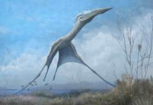 Reconstruction of the giant pterosaur Hatzegopteryx launching into the air, just after the forelimbs have left the ground. Credit: Mark Witton