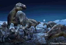 "Published in PLOS ONE today, a study by an international team from the Perot Museum of Nature and Science in Dallas and Hokkaido University in Japan further explores the proliferation of the most commonly occurring duck-billed dinosaur of the ancient Arctic as the genus Edmontosaurus. The findings reinforce that the hadrosaurs - dubbed ""caribou of the Cretaceous"" - had a geographical distribution of approximately 60 degrees of latitude, spanning the North American West from Alaska to Colorado. Credit: Masato Hattori"