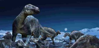 """Published in PLOS ONE today, a study by an international team from the Perot Museum of Nature and Science in Dallas and Hokkaido University in Japan further explores the proliferation of the most commonly occurring duck-billed dinosaur of the ancient Arctic as the genus Edmontosaurus. The findings reinforce that the hadrosaurs - dubbed """"caribou of the Cretaceous"""" - had a geographical distribution of approximately 60 degrees of latitude, spanning the North American West from Alaska to Colorado. Credit: Masato Hattori"""