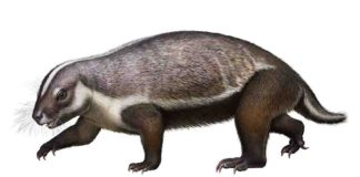 Life-like reconstruction of Adalatherium hui from the LateCretaceous of Madagascar. Credit: Denver Museum of Nature & Science/Andrey Atuchin.