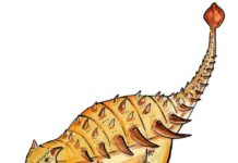 What the ankylosaur Bissektipelta archibaldi might look like. Credit: the authors of the paper.