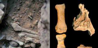 Amud 9 fossils. Credit: Osborjn M. Pearson and Adrián Pablos