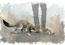 Artist's impression of the giant dormouse (left) and its nearest living relative the garden dormouse (right). Credit: James Sadler, University of York