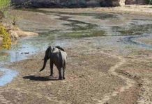 An African Elephant walks through the drying streambed of Chitake Springs as the drought season descends on Mana Pools National Park in Zimbabwe Photo credit: Trisha Atwood.