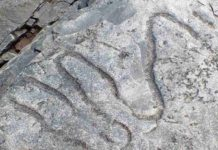 A fossilized meandering grazing trail from the Cambrian era. Credit: Luis Buatois