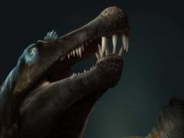 Artist's impression of Spinosaurus. Credit: Davide Bonadonna