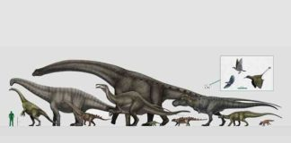 The largest and the smallest: dinosaurs reached an amazing range in size through the Mesozoic Era. Credit: Vitor Silva