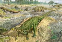 The first complete dinosaur skeleton ever identified has finally been studied in detail and found its place in the dinosaur family tree, completing a project that began more than a century and a half ago. Credit: John Sibbick