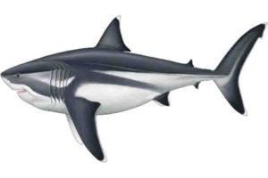 Palaeoartist reconstruction of a 16 m adult Megalodon. Credit: Reconstruction by Oliver E. Demuth
