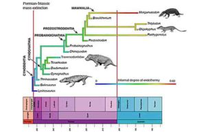 The origin of endothermy in synapsids, including the ancestors of mammals. The diagram shows the evolution of main groups through the Triassic, and the scale from blue to red is a measure of the degree of warm-bloodedness reconstructed based on different indicators of bone structure and anatomy. Credit: Mike Benton, University of Bristol. Animal images are by Nobu Tamura, Wikimedia