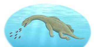 An illustration of Brevicaudosaurus. Credit: Tyler Stone BA '19, art and cinema; see his website tylerstoneart.wordpress.com