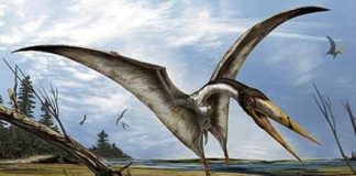 Pterosaurs with these types of beaks are better known at the time period from North Africa, so it would be reasonable to assume a likeness to the North African Alanqa. Credit: Attributed to Davide Bonadonna