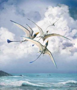Rhamphohynchus - one of 75 pterosaur species studied by the researchers Credit: Mark Witton