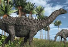 Titanosaurs were common at the time of the asteroid hit at the end of the Cretaceous 66 million years ago. (Credit: AlienCat)