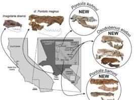 Map & Skulls. Credit: Journal of Vertebrate Paleontology