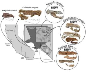 Map & Skulls. Credit: Journal of Vertebrate Paleontology