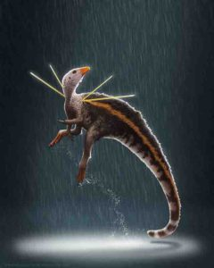 Ubirajara jubatus is named after a Tupi Indian name for 'lord of the spear', in reference to the creature's stiffened, elongate integumentary structures, and jubatus from the Latin meaning 'maned' or 'crested'. Image must be credited Credit: Artwork © Bob Nicholls / Paleocreations.com 2020