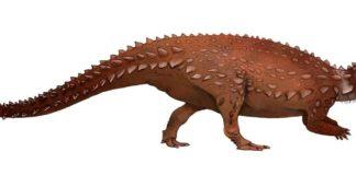Illustration of the Jurassic thyreophoran Scelidosaurus harrisonii, Jack Mayer Wood, CC BY-SA 4.0, via Wikimedia Commons