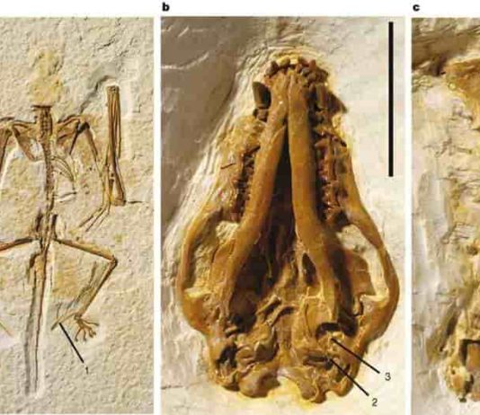Representative Image: Holotype of Onychonycteris finneyi