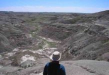 Researcher overlooking one of the two field sites for the study, the Frenchman Valley in Chambery Coulee Saskatchewan in July 2017. Credit: McGill University