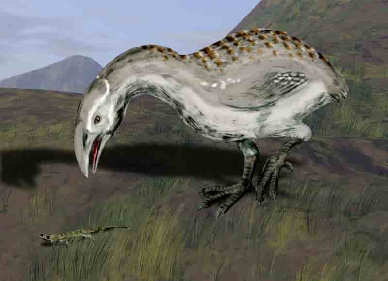 Adzebills, also close relatives of cave-rails, were large, flightless birds with big beaks that could have been used to prey on small animals or strip vegetation. Illustration courtesy of Nobu Tamura, CC BY 3.0