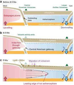 In this image, the warped amount of the surface is due to the opening of the Central American gateway that allowed hot material to flow through. (a) Before 8.5 million years ago, hot material was upwelling under the Galapagos from deep inside the Earth, but was blocked out of the Caribbean because of a curtain of subducting plate. (b) A gateway opened at 8.5 million years ago allowing the hot material to flow through. (c) Today, the hot material reaches midway between Central America and the Lesser Antilles, tilting up the bottom of the Caribbean sea by about 300 m (1,000 ft). Credit: University of Houston