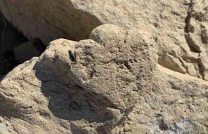 The world's smallest stegosaur footprint (less than 6 cm long), Xingjiang, China. Photo credit - Lida Xing.