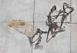 Entombed in limestone blocks, the newly studied fossil is the first nearly complete skeleton of a pterosaur species that was first described in 2003. Photograph by Victor Beccari