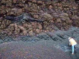 Tree stomp in lignite deposits. Credit: Vittoria Lauretano