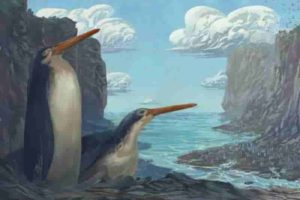 The Kawhia giant penguin Kairuku waewaeroa. Image credit: Simone Giovanardi. Permission for use of the image by media is granted by the artist, with credit.