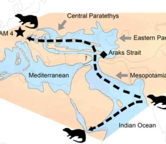 The dispersal of the Vishnuonyx otters from the Indian subcontinent to Africa and Europe about 13 million years ago. The star (HAM 4) shows the position of the Hammerschmiede fossil site. Image: Nikos Kargopoulos
